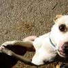 Hogyan változtassunk a kutya nem kívánt viselkedési formáin? - 2. rész
