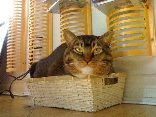 Macska a kosárban