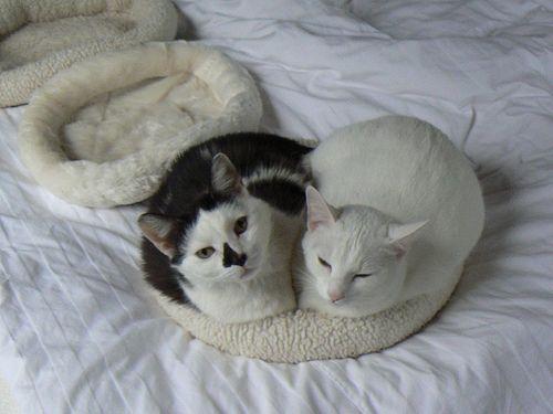 Két macska