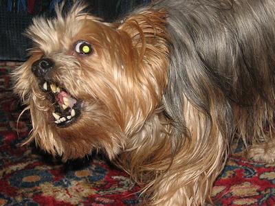 duhos-kutya