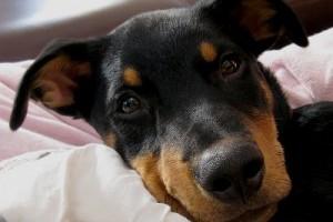 A kutyámat valóban minden évben be kell oltani?