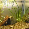 Szakembereink: Zoller Zsolt - akvarista