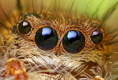 Pókszemek