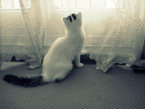 Van macska