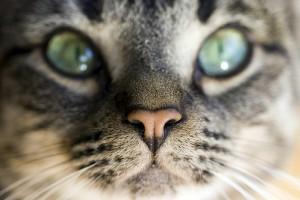 Asztmás cicák