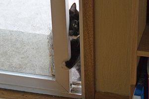 Hogyan előzhető meg, hogy a macskák korán keljenek?