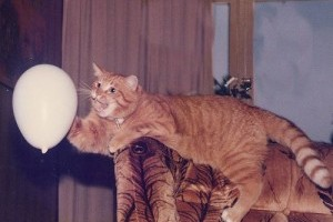 A cica és a lerázhatatlan lufi