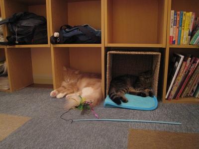 Macskák kávézója