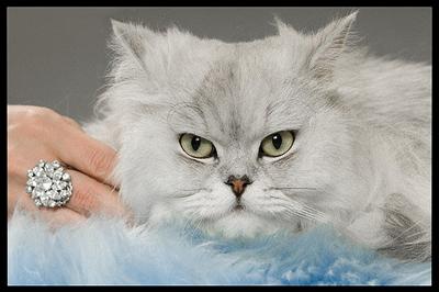macska-divat