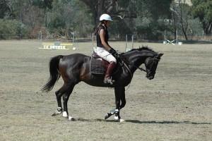Hogyan tanítsuk meg a lovat az oldaljárásra?