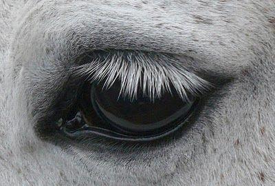 lovak-szemei