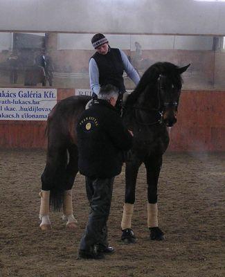 Engedelmes ló