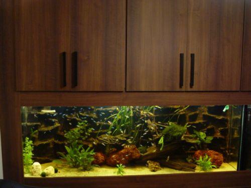 tengeri víz az akváriumban