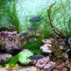 11 hiba, amit egy sósvízi akvárium tulajdonosa elkövethet - 2. rész