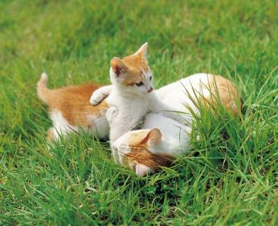 Macska hőguta