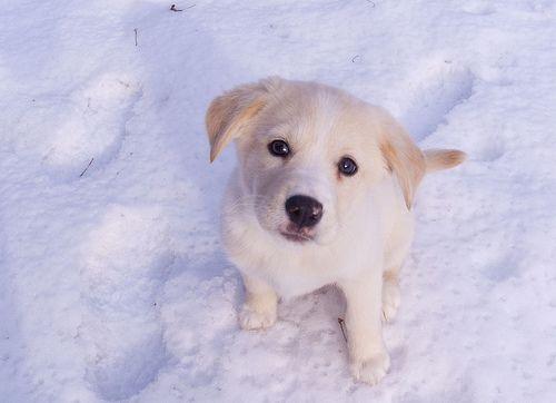 Heimlich-manőver kutyák esetében