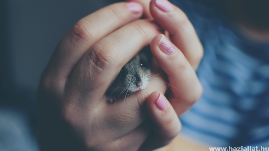 Segítség! Harap a hörcsögöm – Mitévő legyek?