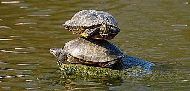 Teknősők