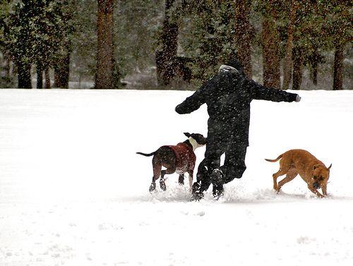 Kocogás a kutyával
