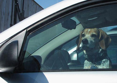 Autózás a kutyával
