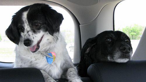 Utazz a kutyáddal