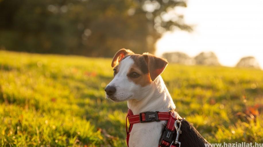 Kirándulás kutyával: ezekre figyelj, hogy mindketten jól érezzétek magatokat!
