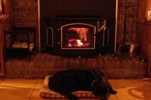 Tűzvédelmi tippek kutyatartóknak