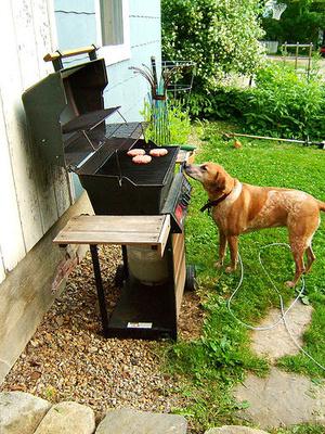 kutya-grill