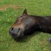A ló elaltatása - 1. rész