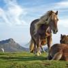 A ló elaltatása - 2. rész