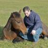 A ló elaltatása - 3. rész