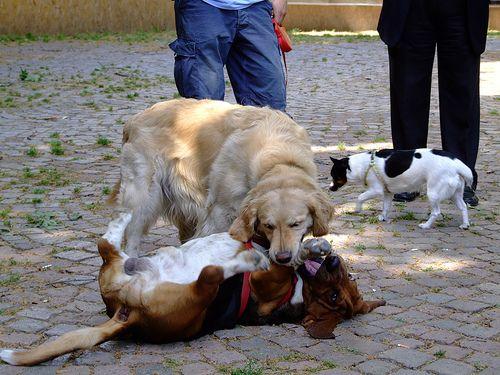 kutya-bunyo