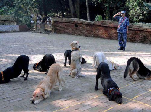 kutyatrening