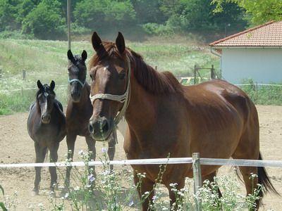 Nagy melegben javasolt jobban odafigyelni a ló viselkedésére