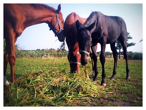 legelo-lovak