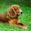 A kutyák izületi gyulladásának kezelése és a fájdalom megszüntetése