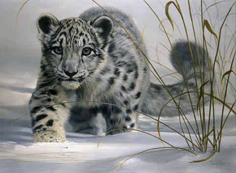 Hópárduc vadászaton