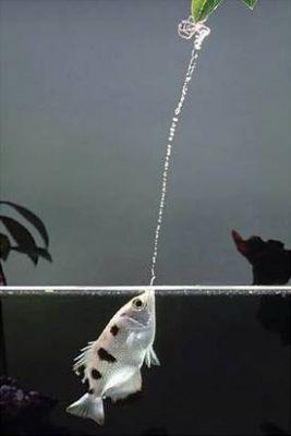 A lövőhal akció közben