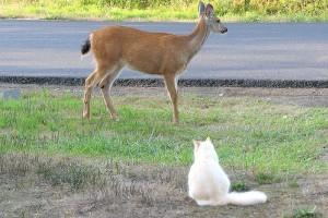 A szarvas és a cica barátsága