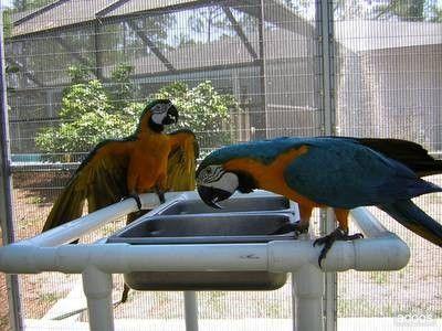 Az itatónak a madár méretéhez kell alkalmazkodnia