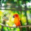 A papagájok kiszáradásának megelőzése