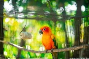 Így előzheted meg a papagájod kiszáradását a kánikulában