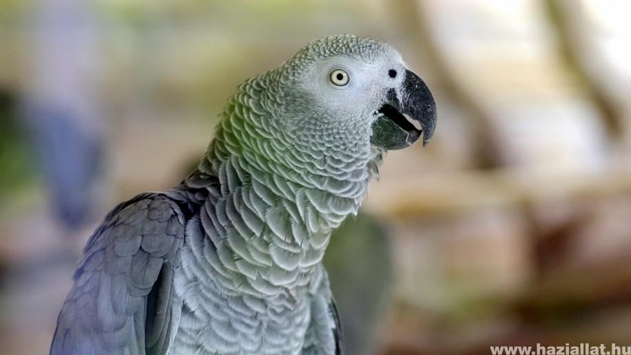 Állapítsuk meg a papagáj egészségét tollazatáról!