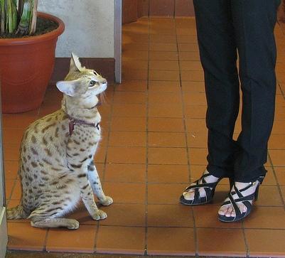 a-legmagasabb-macska