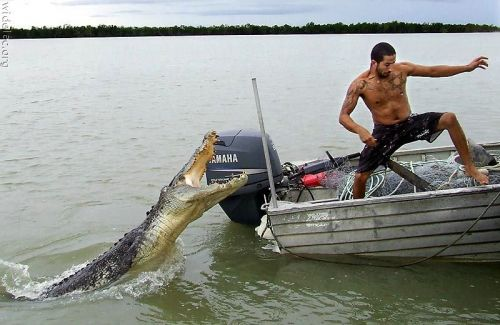 krokodil-tamadas