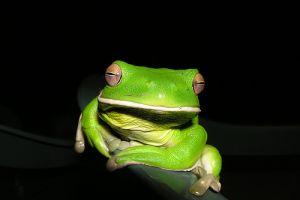 Tíz csodálatos zöld állat