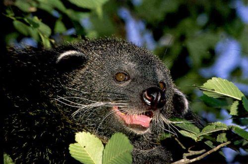 Sajnos ez a lenyűgőző állat is a veszélyeztetett fajok közé tartozik