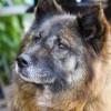 Megfelelő étrenddel az idős kutyák is taníthatók