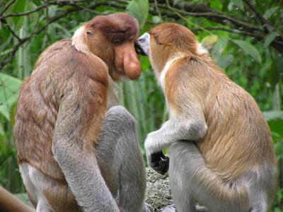 erdekes-majompar