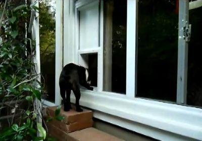 Ajtó kutyának